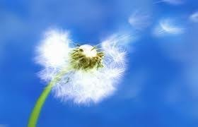 Causas de las alergias, Un purificador de aire para el hogar 10