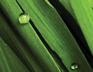 Nutricionales - nikken - jade- verde