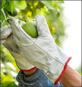 Nutrilite y la agricultura sostenible