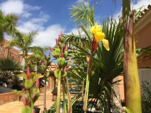 Cambia en verano el agua embotellada por agua filtrada, hidratación, mejorar la calidad de vida, imanes para las plantas